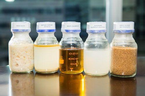 廚餘經過生物分解的過程。